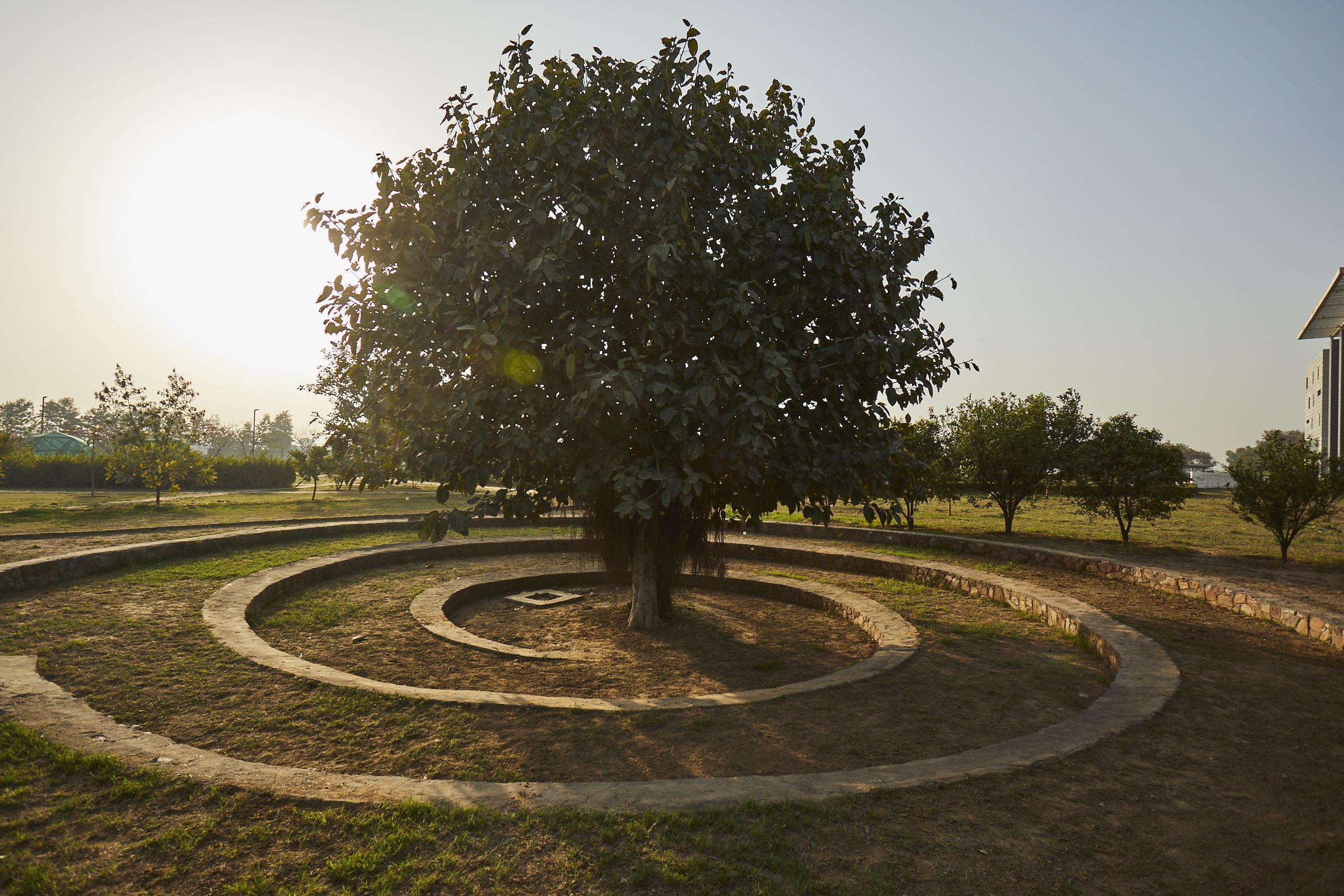 Bodhi Tree at Vedatya