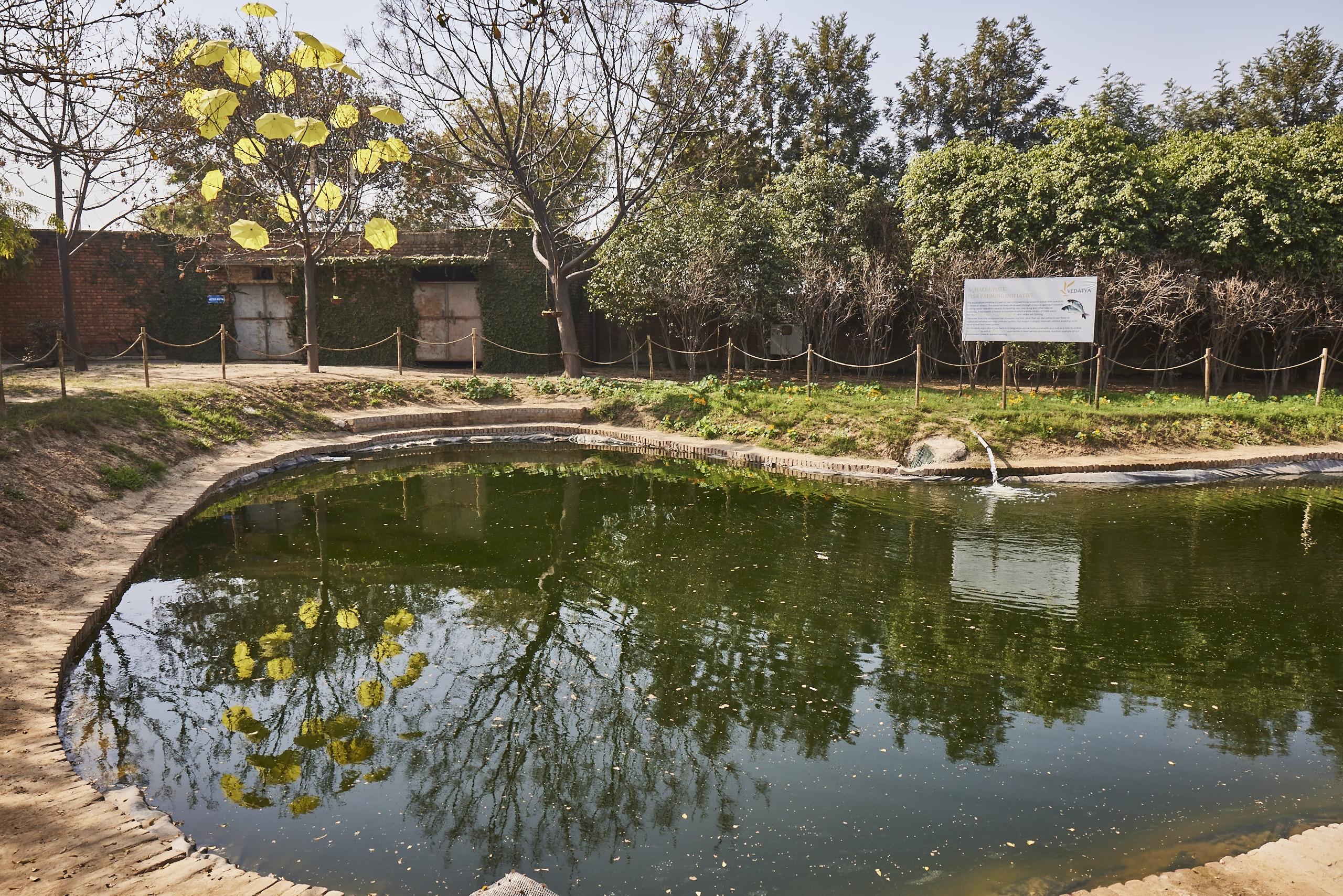 Fish pond at Vedatya Institute